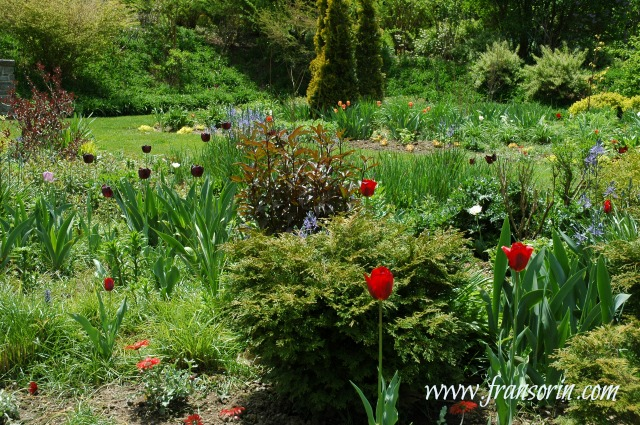 using red in the garden