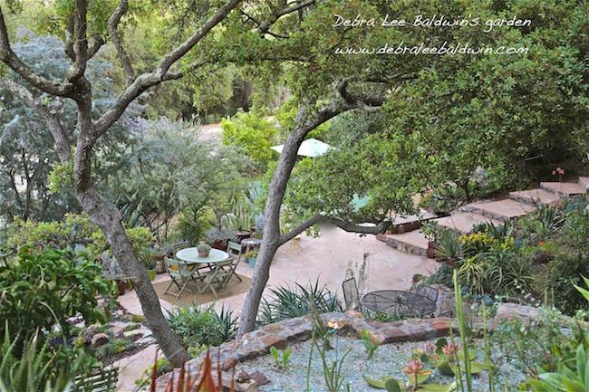 IMG_6889-resized.jpg- Debra Lee Baldwin's garden re-do