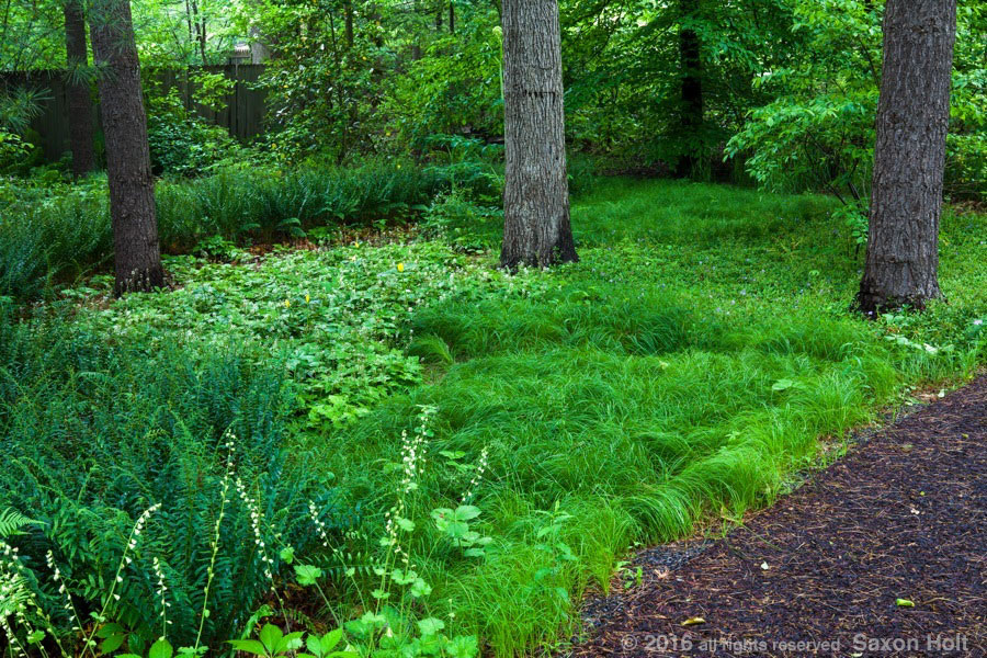 Shady native plant woodland groundcovers with grass in Chanticleer Garden