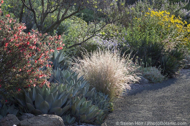 Californa native plant garden at Leaning Pine Arboretum