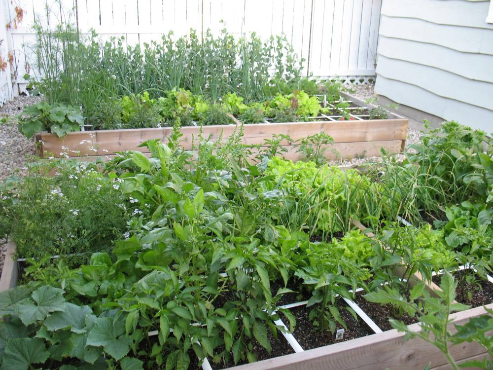 Square Foot Gardening is Anything but Square (5/5)