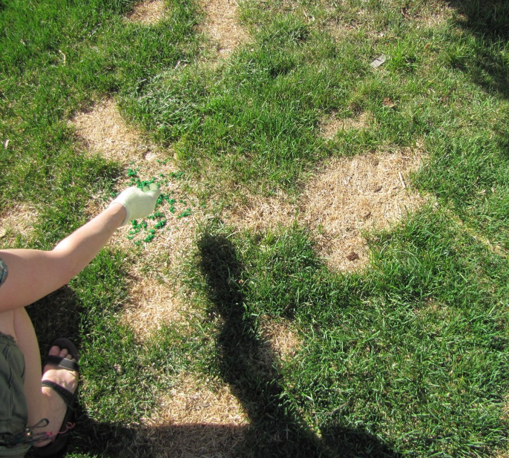 Homemade Grass Paint (4/6)