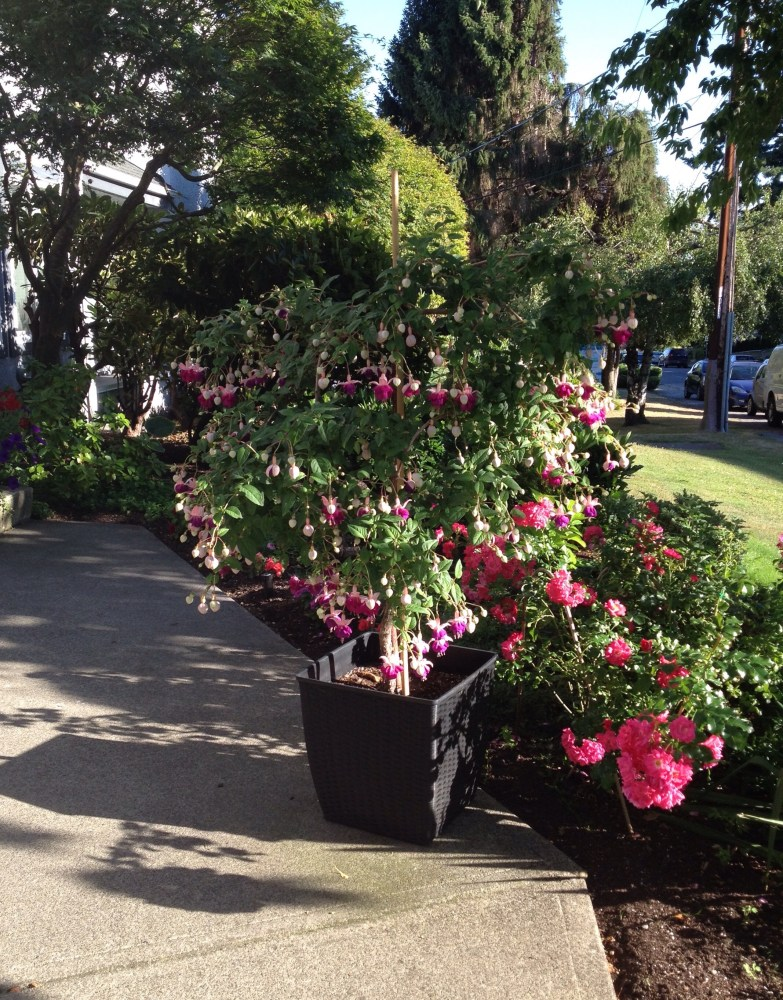 Thriller, Fillers and Spillers: The Formula for a Fabulous Planter (5/6)