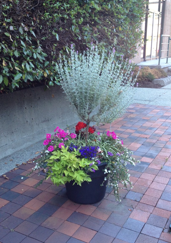 Thriller, Fillers and Spillers: The Formula for a Fabulous Planter (3/6)