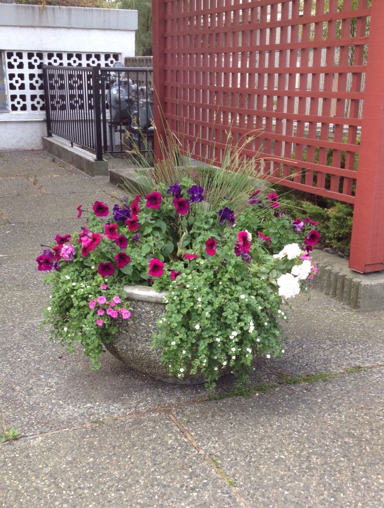 Thriller, Fillers and Spillers: The Formula for a Fabulous Planter (2/6)