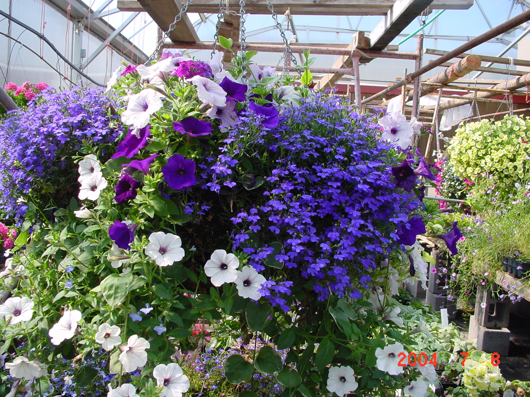 Discover The Beauty Of Hanging Flower Baskets  Container