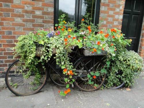 All About Gardening And Nature: Container Gardening Ideas