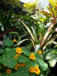 Leigh's lovely garden
