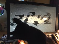 Watching the birds on my computer screen