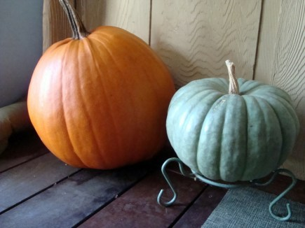 I grew this gorgeous green pumpkin from seed. One of my favorites. They're native to Australia.
