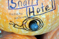 Snail Hotel: Mollusks Welcome