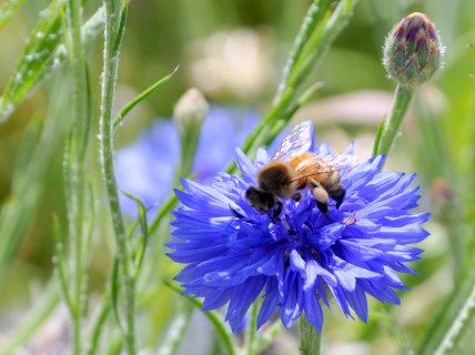 I LOVE bees