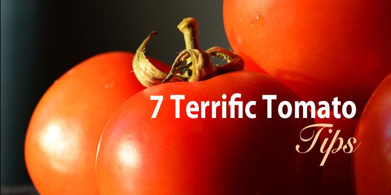 7 terrific tomato tips
