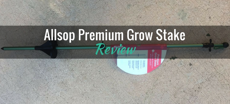 Allsop-Premium-Grow-Stake-featured-image