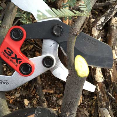 Conrona-(ComfortGEL-+-Extendable)-Loppers-pruning-cut
