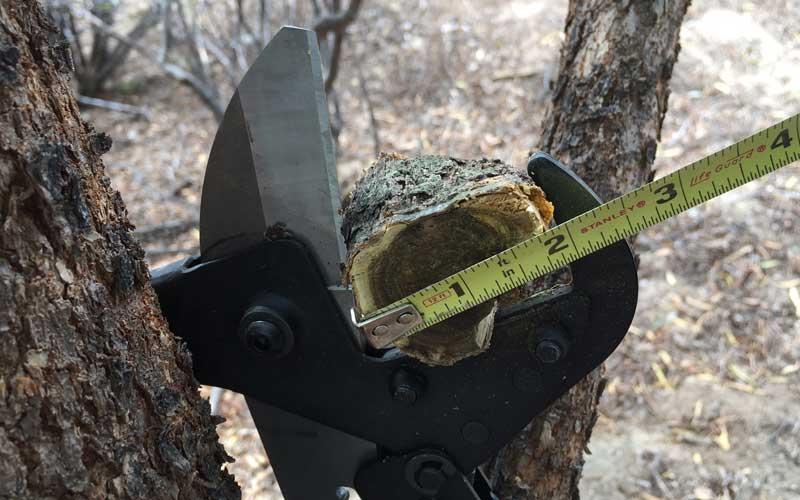 florian-maxi-lopper-cutting-2-inch-material