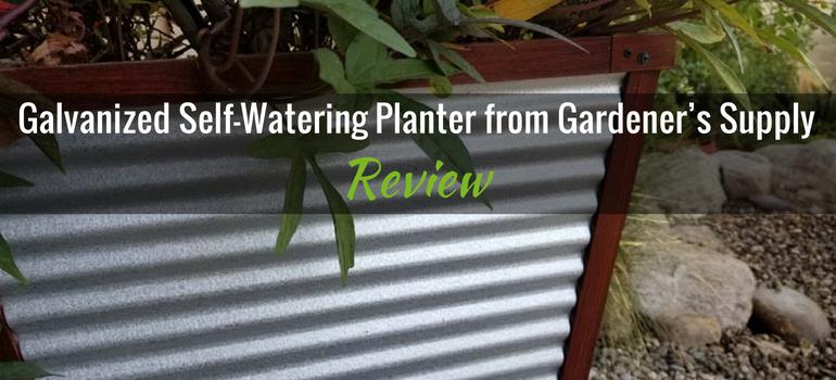 galvanized planter featured image