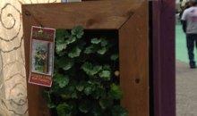 Living Wall Planter from GroVert: Product Review