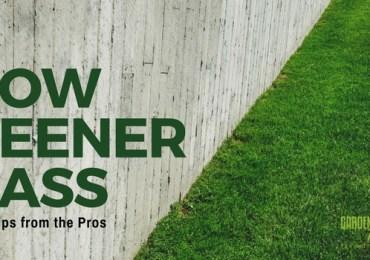 grow greener grass lawn tips