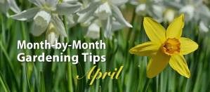 April gardening tips