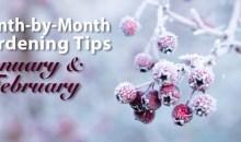 Gardening Tips for January & February