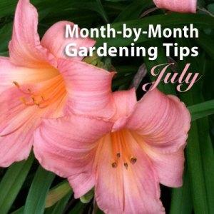 Gardening Tips: July