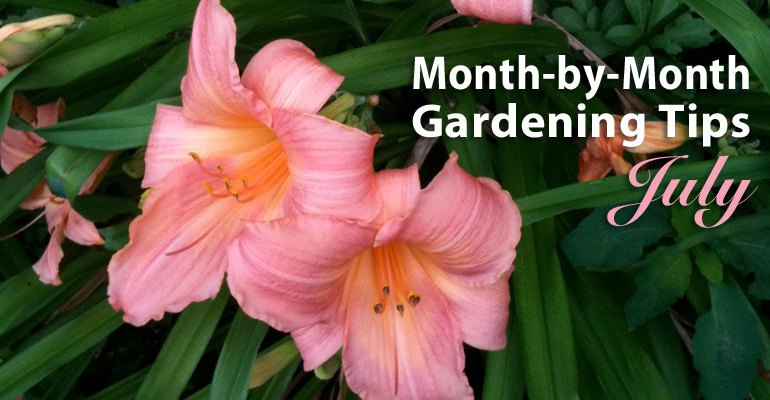 Gardening tips for July