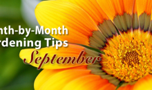 Gardening Tips for September