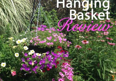 Plantopia hanging basket review