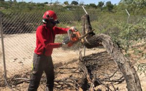 Redback-Chainsaw-cutting