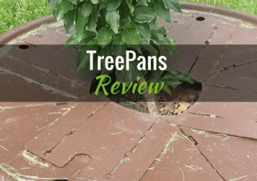Tree Pan with Cornus close