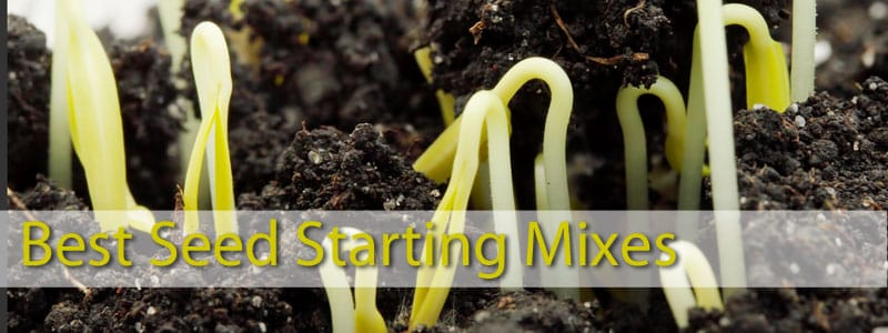 Review of best seed starting mixes