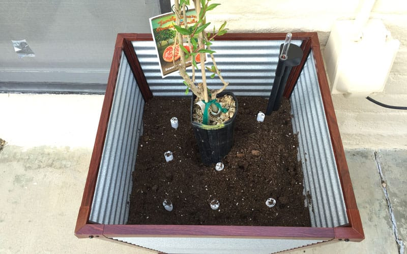 galvanized planter planting
