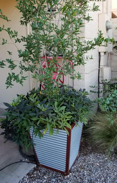 galvanized planter tall