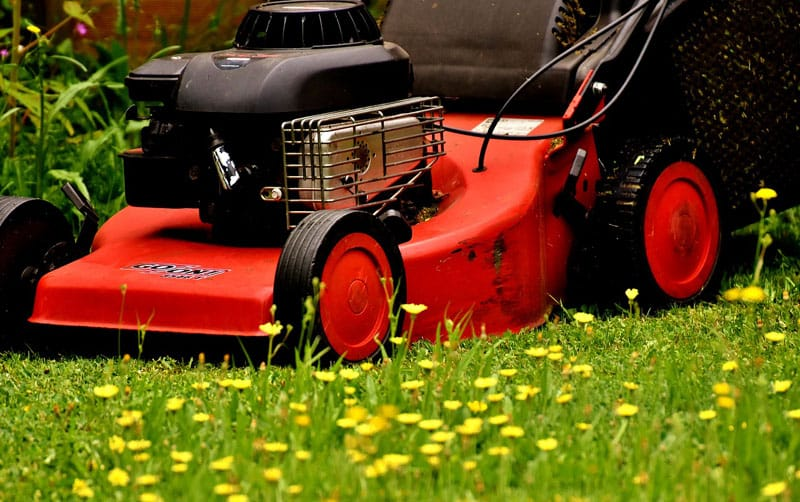 lawn mower flowers
