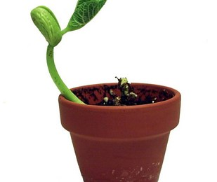 growing seedlings under lights