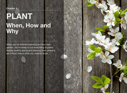 plan plant grow image1