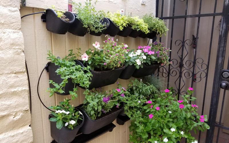 watex green wall all pots mounted