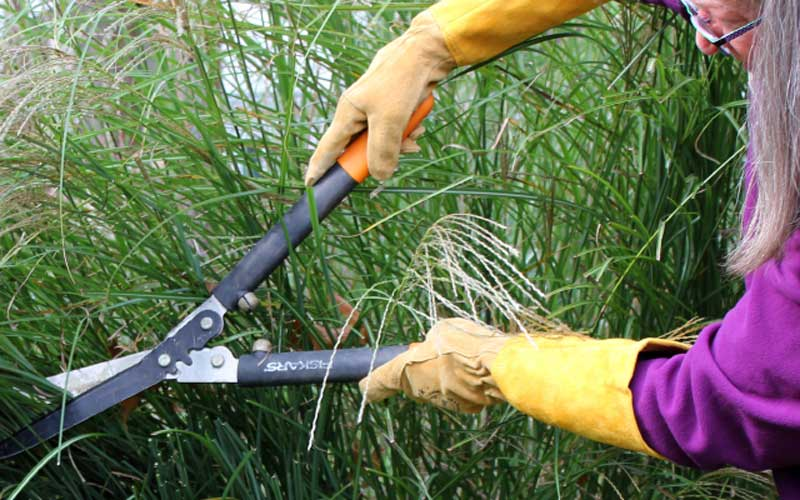 Womanswork-rose-gauntlet-pruning-grasses