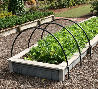 Raised Beds With Lettuce Vegetable Gardening
