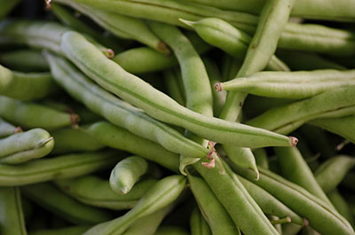 Bush Beans Gardening Solutions University Of Florida Institute Of Food And Agricultural