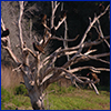 Vultures perched in a leafless dead tree