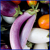 Purple and white eggplants