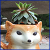 Small succulent planted in a ceramic mug resembling a fox's head
