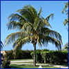 A palm tree in an attractive yard