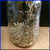 sprouts in a clear mason jar
