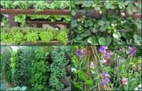 Vertical Vegetable Garden Wall