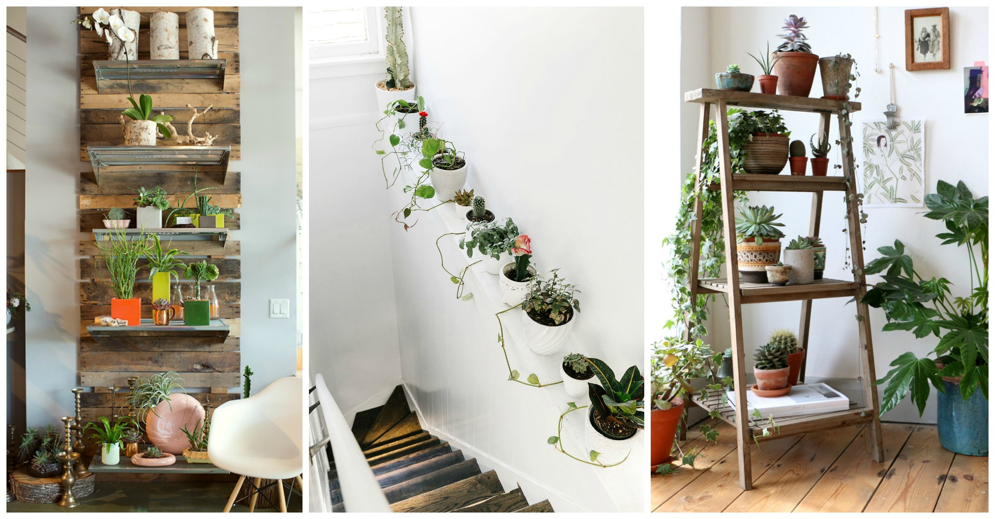 10 Unexpected Ways To Decorate Your Home With Plants