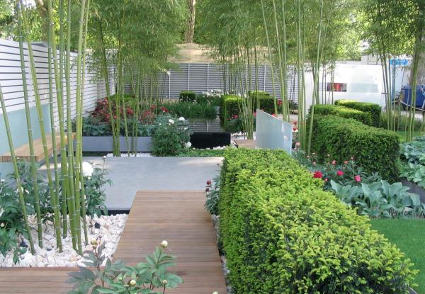 grow bamboo growing conditions