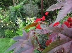 Suburban garden makeover mature 110